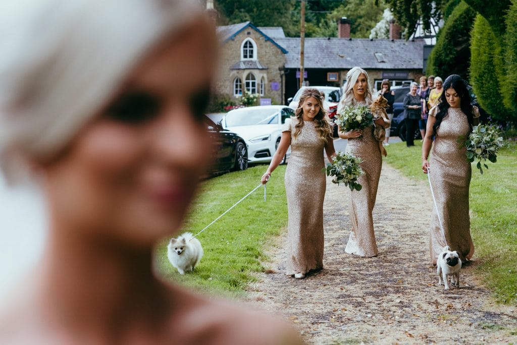 pets at weddings in shropshire